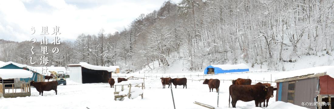東北の里山里海はうつくしい 冬の岩泉 短角牛