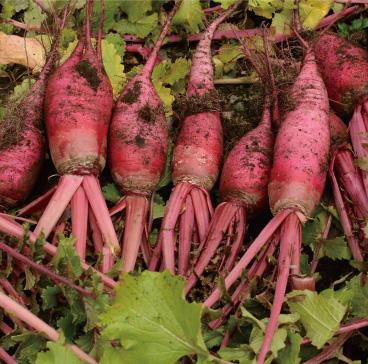 農産物イメージ