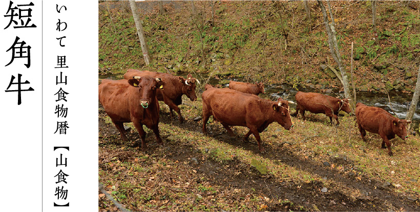 いわて 里山食物暦【山食物】短角牛