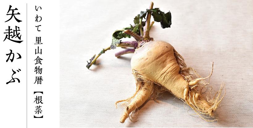 いわて 里山食物暦【根菜】矢越かぶ